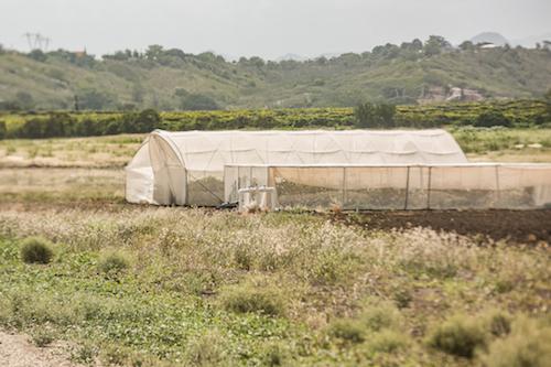 Las empresas reciben agua gratis de los acuíferos del sur.