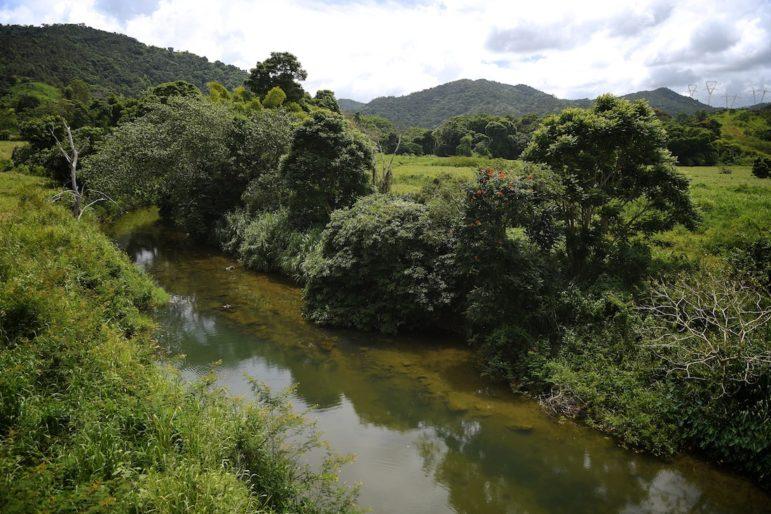 Área natural por donde pasaría la nueva carretera que daría a su vez acceso al hotel y centro comercial de Ciudadela de Cayey.